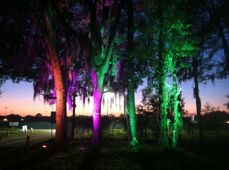 Sample, Outdoor Tree LED Color Uplighting