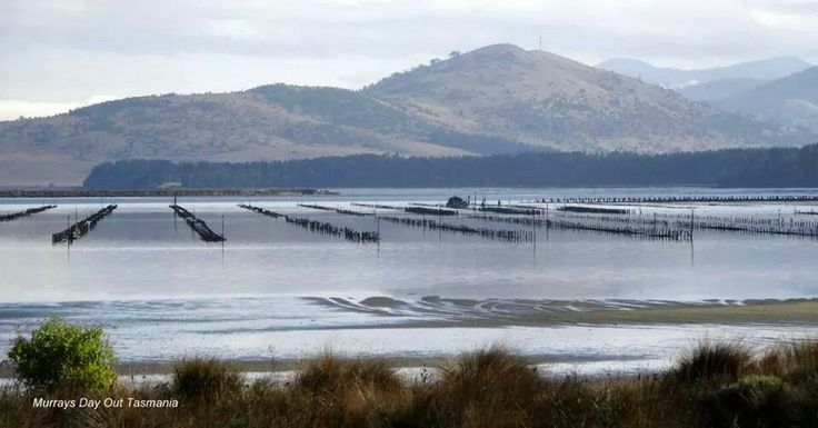 Barilla Oyster Farm just South of Hobart Tasmania 6.2014 photo credit to Murrays Day out tasmania