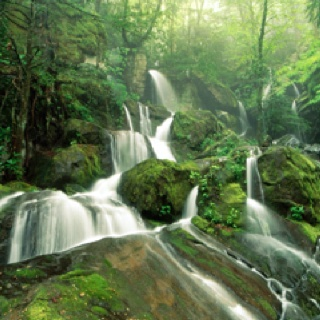 : Forests, Jungles, Great Smoky Mountains, Android, Mountain National Parks, Beautiful Waterfall, Beautiful Places, Blog, Branches