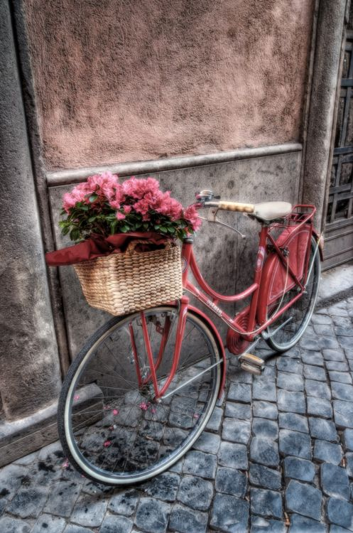 "Pink vintage bicycle with basket of pink flowers. ""Flowers On the Bicycle' Photo by Pandarino."