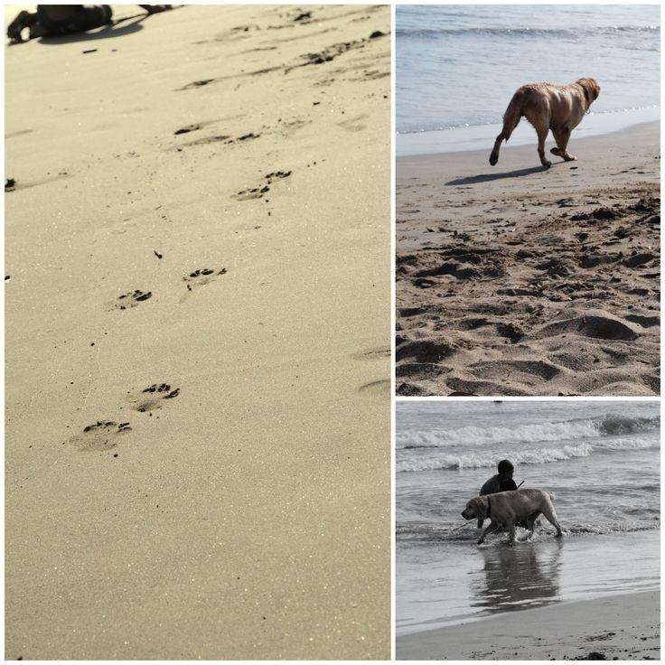 un lindo perrito atravesó  mi area de fotos jaja photo by angie mejias