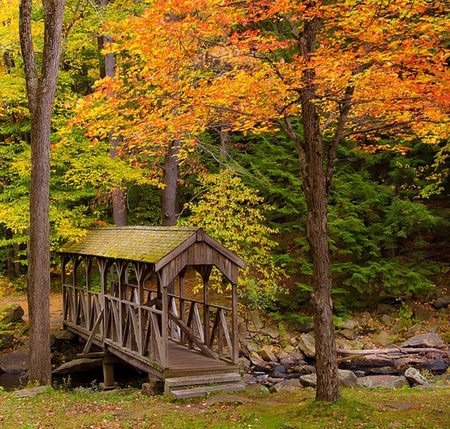 Covered Bridge - autumn, bridge, house, trees