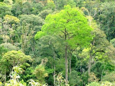 Vale do Silício Amazônico Salva o Verde Vale do Silício Amazônico Salva o Verde  Segundo cientistas, a maior floresta tropical do mundo, a Floresta Amazônica, se transformará no futuro Vale do Silício Amazônico, que redirecionará os fundamentos do desenvolvimento sustentável, o que permitirá a salvação do verde. #ValedoSilícioAmazônico #FlorestaAmazônica #quartarevoluçãoindustrial http://sigasigo.blogspot.com.br/2016/09/vale-do-silicio-amazonico-salva-o-verde.html