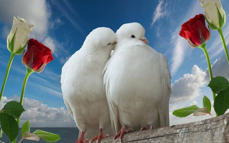 Love Bird High Resolution Wallpapers 11794 - Amazing Wallpaperz