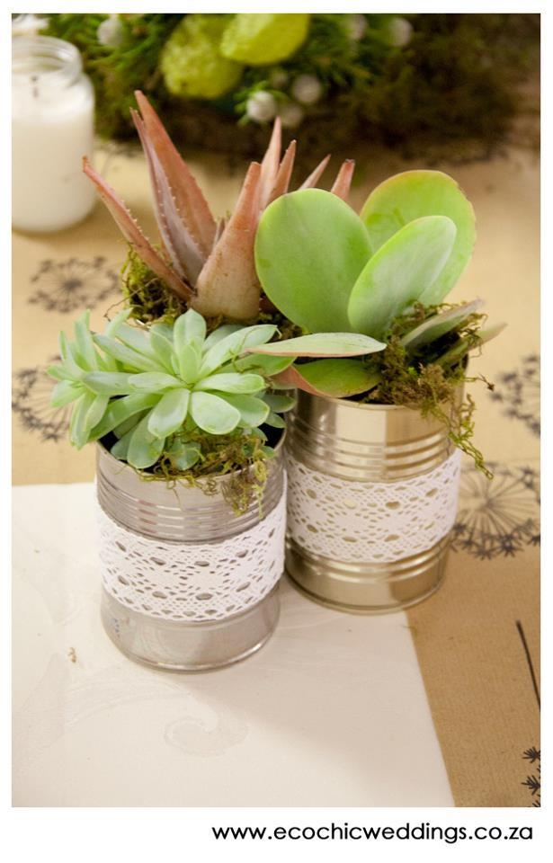 Tin-can succulents.  Cherie's already collecting cans!