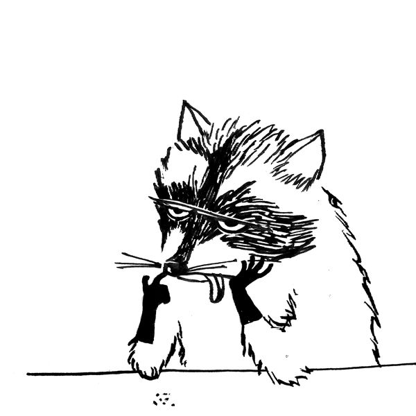 Bored raccoon