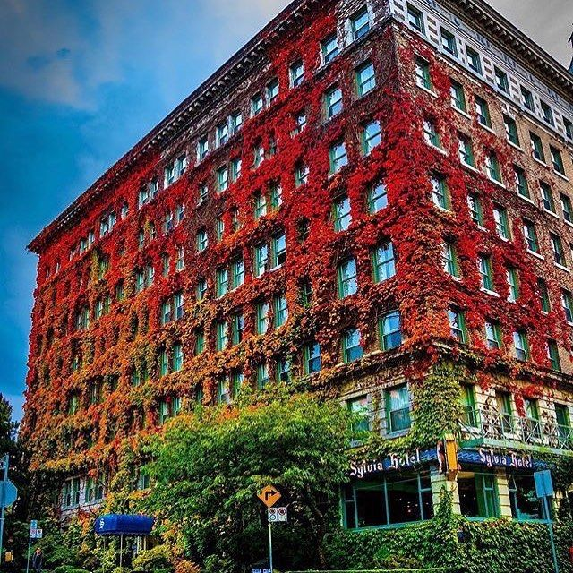 Favourite West End Building - The Sylvia Hotel which is getting redder and redder. by @kurtistphotography . .  #VancouverCanada #vancityhype #getoutside #discoverglobe #beautifuldestinations #socialrealtor #socialmedia #yvrre #realtor in #yaletown #vancity #vancouverrealestate #theevlist #wp #linkedin #instahub #instagood #love #engelvolkers #westend #sylviahotel @vancouver_canada