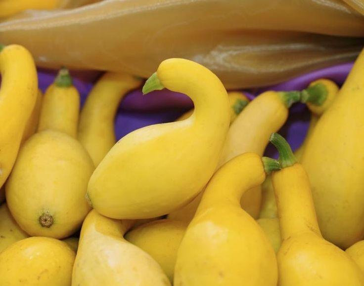 How to Prepare Yellow Crookneck Squash