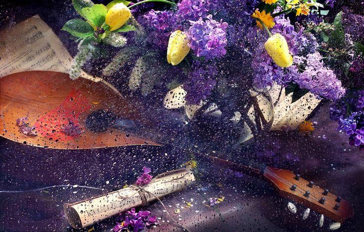 Renatures.com - Lilac Yellow Tulips Rain Still Drops Lilacs Flowers Life Nature Flower Wallpaper Macbook