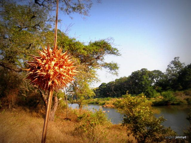 Letaba river Limpopo South africa