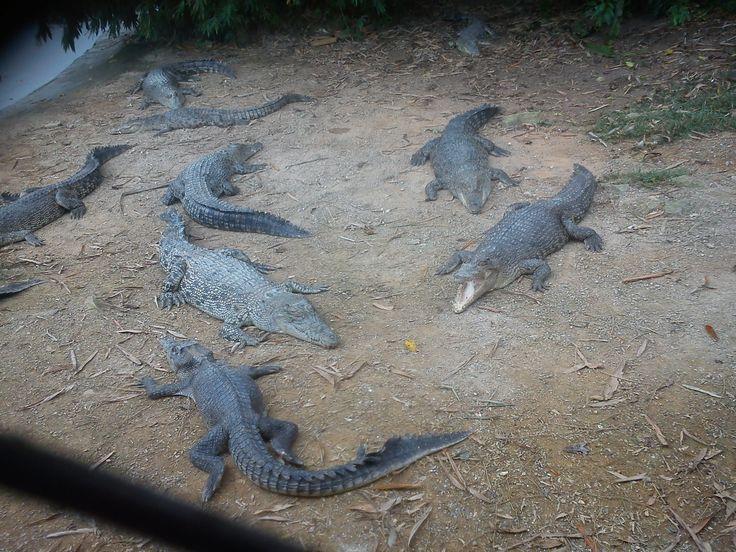 Crocs....crocs... everywhere
