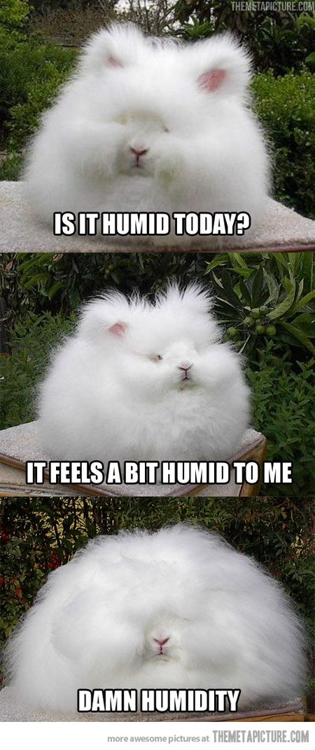Ha ha!!! Loved this :): Humidity Today, Curly Hair Problems, Hair Doe, My Life,  Angora Rabbit, Funny Stuff, I Cans Relate, Hair Looks, Curlyhair