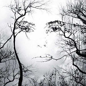 Living Trees...Trees Art, Optical Illusions, The Face, Trees Face, Female Face, Mothers Nature, Illusions Art, Opticalillusions, Nature Beautiful