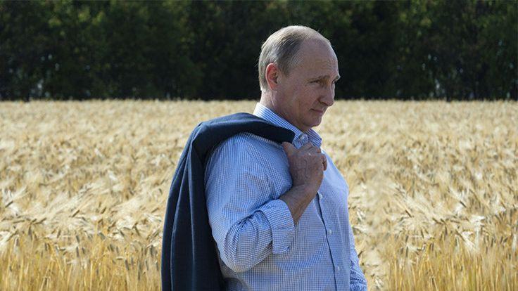 Rusia podría convertirse en el mayor proveedor del mundo de alimentos de alta calidad, saludables y no transgénicos, declaró este jueves el presidente ruso, Vladímir Putin, ante la Asamblea Federal rusa. El mandatario también abogó a favor de la completa autosuficiencia de Rusia en la producción de alimentos para el año 2020.