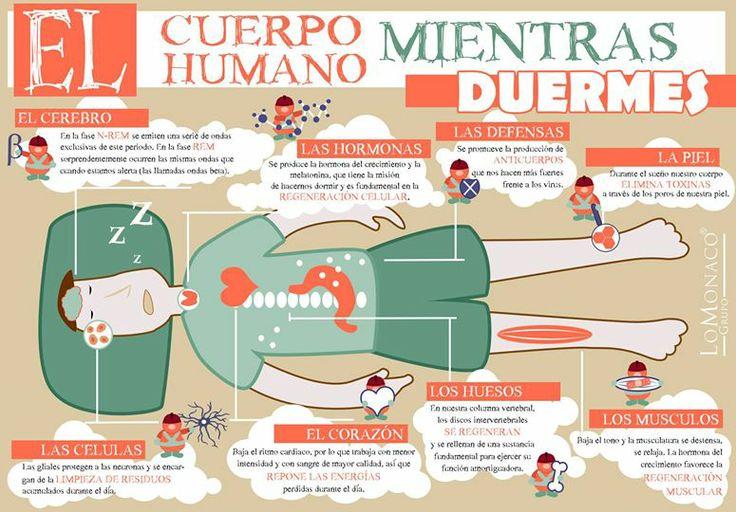 Sabías que mientras duermes tu cuerpo sigue trabajando ¿cómo? Descúbrelo en esta infografía de Lo Monaco