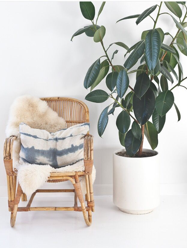 1000 Ideas About Rattan Chairs On Pinterest Rattan