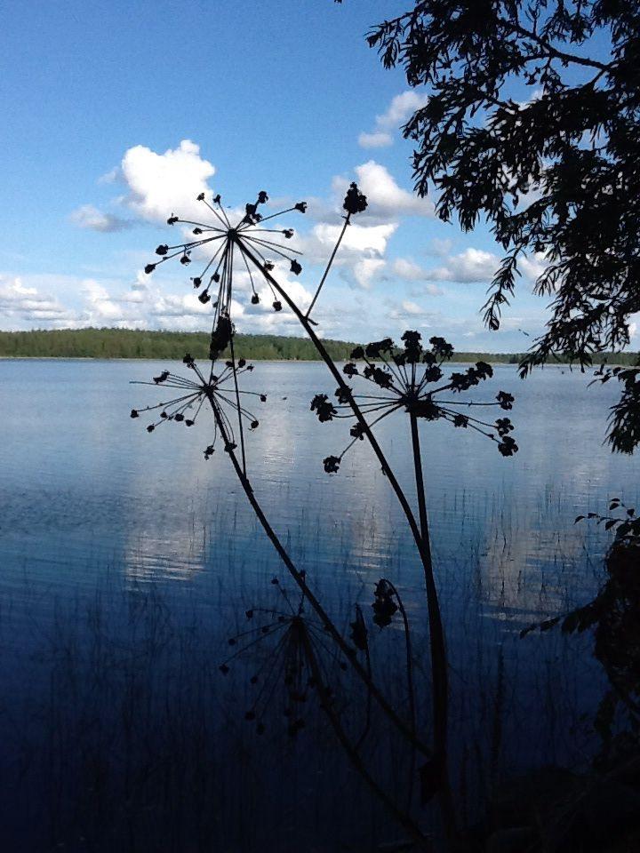 Järvinäkymä oman mökin rannalta. Suomi on kesällä parhaimmillaan