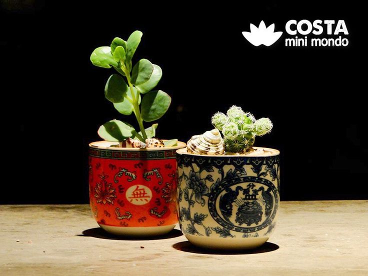 A little more of terrariums 😍 VISIT OUR PROFILE. FOLLOW US 😉 #terrario #terrarium #suculentas #succulents #cactos #cactus #ornamentos #ornaments #jardim #garden #eco #verde #green #mini #beleza #beauty #decoração #decoration #plantas #plants #arranjosflorais #moss #musgo #vase #vaso #instagood #followme #share #like