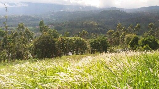In the other side of Kebun Mawar