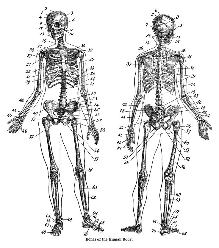 This vintage dictionary page includes definitions for words such as: bone, boning, bonito and bonnet. Also included on the page is wonderful diagram of the bones in the human body. The page is from…