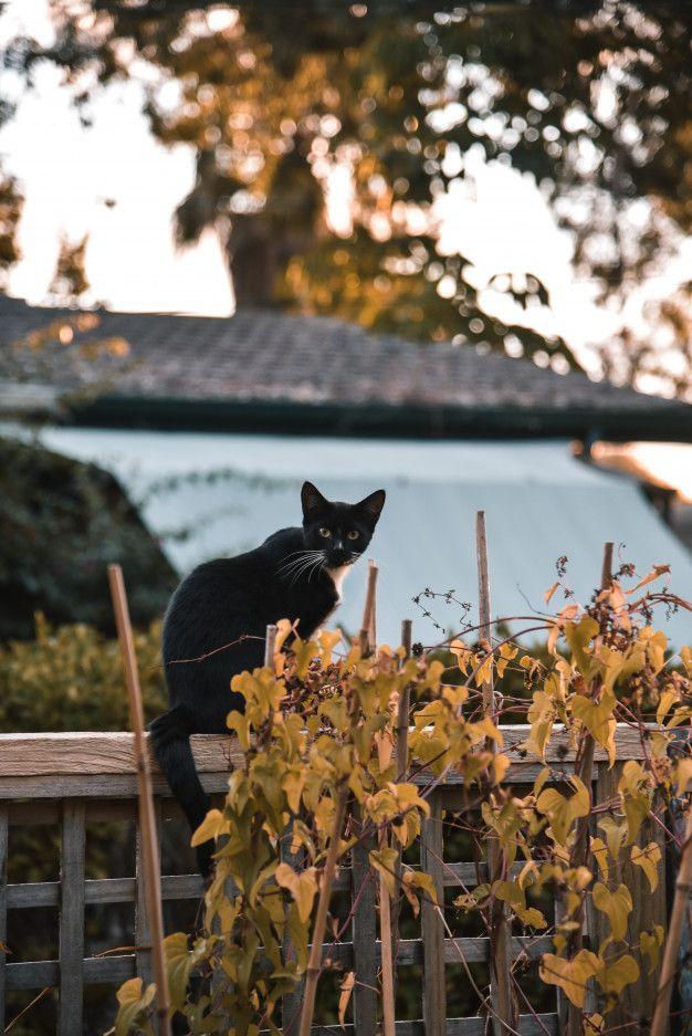 Orange Symbol On Halloween 2020 Black cat as a symbol of halloween with  | Premium Photo