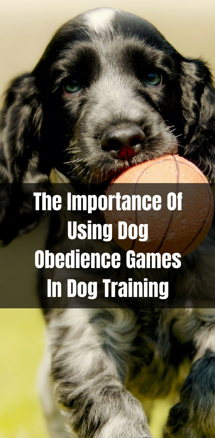 The Importance Of Using Dog Obedience Games In Dog Training Dog