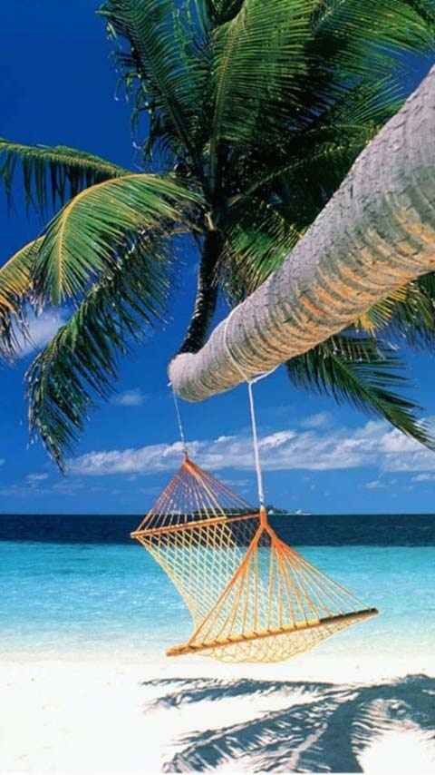 relaxation - a hammock hanging from palm tree on a sunny ...