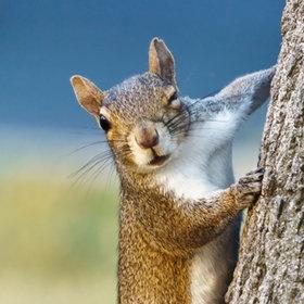 Hey Baby...: Animal Wink, Animal Squirrels, Photos Goodbi, Cores Member, Wink Wink, Nut, Simply Squirrels, Squirrels Fun, Cute Baby Animal