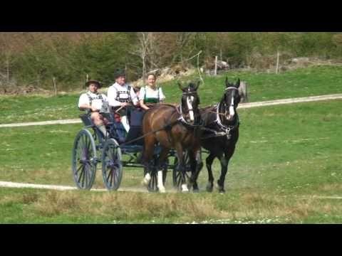 Kutschfahrt durch Murnau am Staffelsee - YouTube
