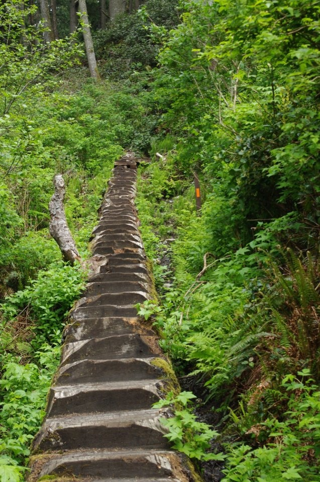 A fallen tree is artistically carved into usable stairs on the trail to Mystic Beach in Sooke, British Columbia. ♥