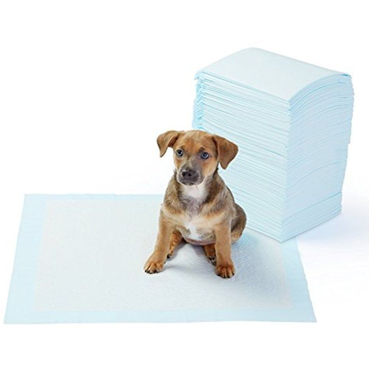Pet Training Pads & Trays And Puppy Pads, Regular 100-Count Fast Shipping  #Doesnotapply