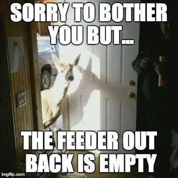 a8f4d3f7dd917a5dd88c7a98009e912b funny animal pictures funny animals 73 best hunting memes images on pinterest hunting stuff, hunting,Funny Deer Memes
