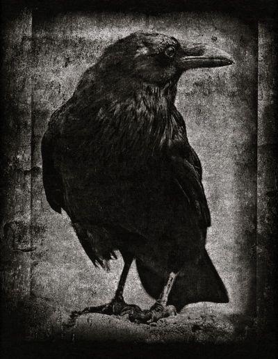 Ornithomancy
