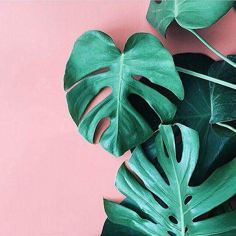 green thumb   plants on pink