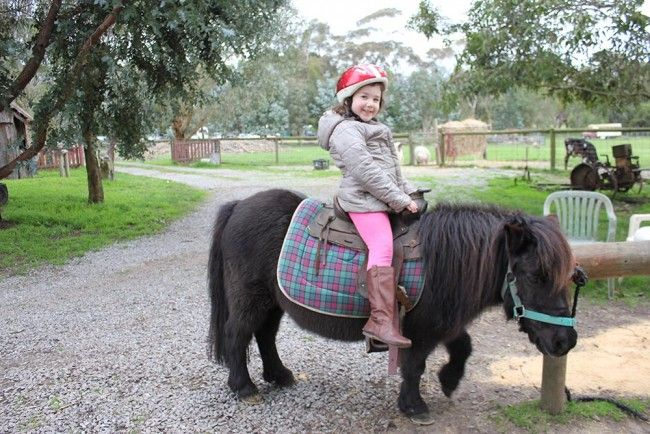 School Holiday Ideas - Rain Hayne Shine Animal Farm - Articles and News on Babies and Toddlers Directory | Babies and Toddlers Directory