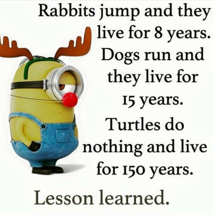 Minion Wisdom meme to live by