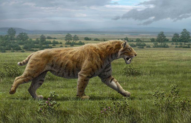 smilodon mauricio anton | Mauricio Anton har til sin kunst undersøgt fossiler af sabeltigere og ...