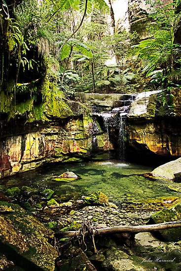 This is a panorama oriented image of the beautiful green moss garden in Carnarvon Gorge In Central Queensland. It is a fair hike to get here, but easy walking and on the way we saw native orchids, wallabies and kangaroos, so it was a pleasant walk and well worth what waited at the end. The cool damp of a rainforest with tree ferns and waterfalls as you follow the boardwalk to the end and see the main waterfall and canyon walls of amazing colours and moss covered branches and rocks which…