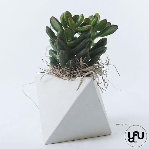 Marturii plante suculente in suport turnat GEOMETRIC- M35 - https://www.yau.ro/collections/marturii-nunta-si-botez?page=1 - yauconcept - elenatoader