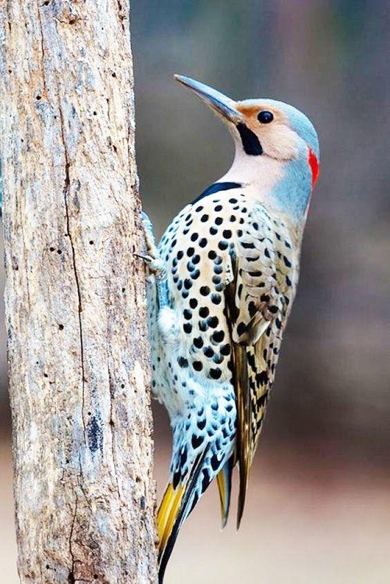 seniorennet.nl  de startpagina voor nederlandse (oiseau bird)