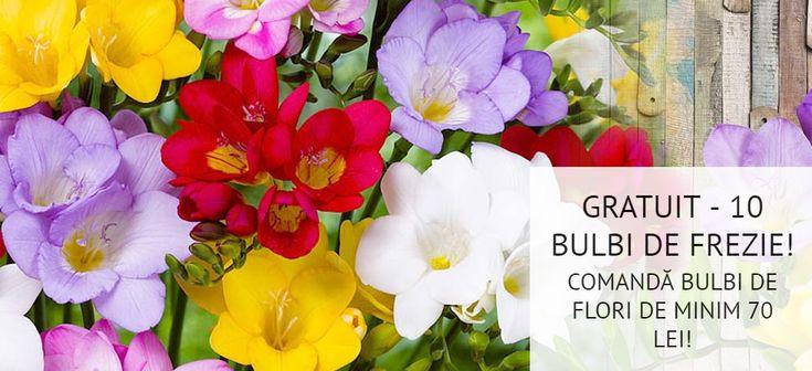 PRIMĂVARA ÎȚI ADUCE ÎN DAR 10 BULBI DE FREZII DUBLE! Comandând până la data de 31.03.2018, produse din categoria bulbilor de flori, în valoare de 70 de lei, vei primi, GRATUIT, 10 bulbi de frezii intens parfumate!