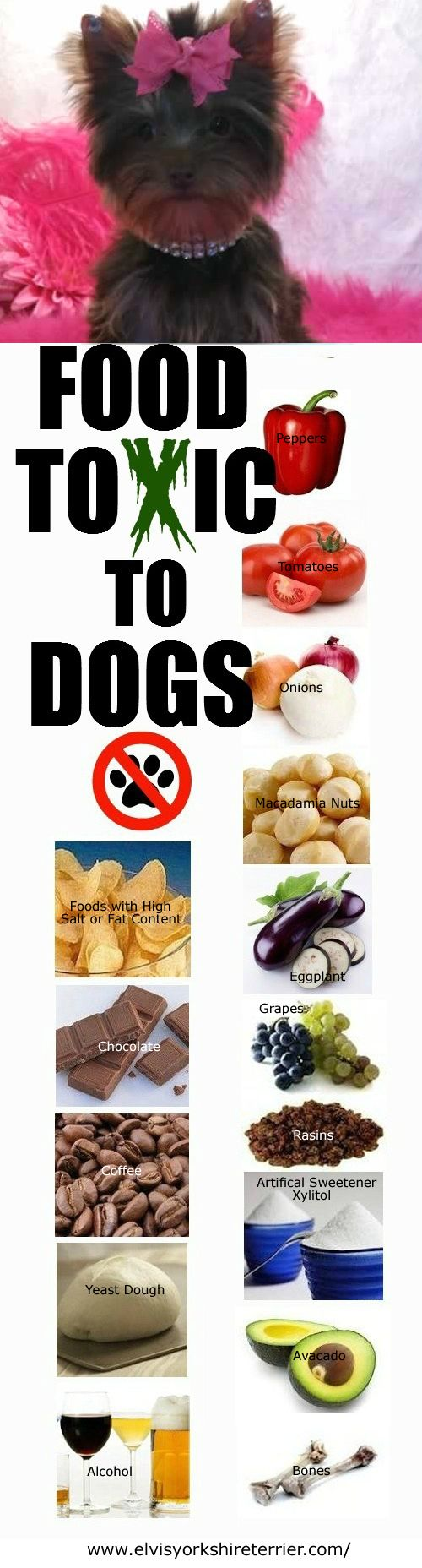 Foods toxic to dogs (good reminder and some I did not know)