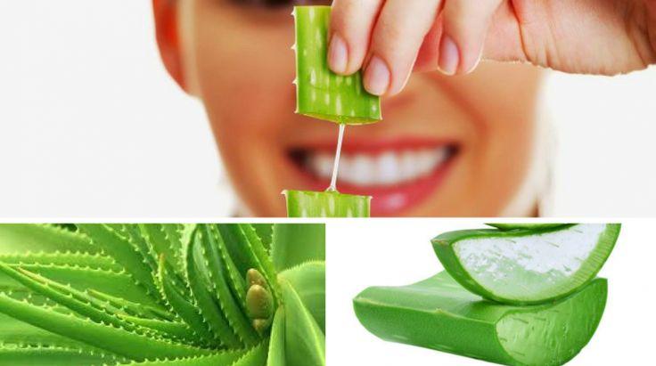 5 Benefícios Mais Importantes da Aloe Vera