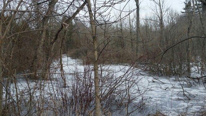 Swamp frozen over.
