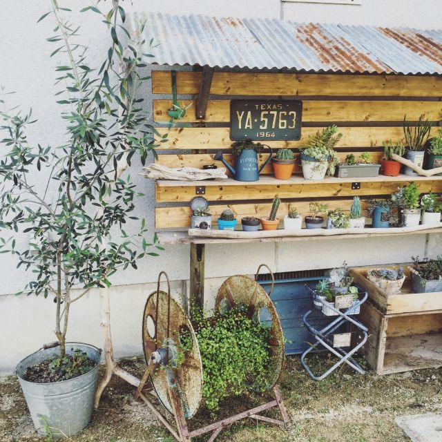 yu_kiさんの、Entrance,サボテン,ガーデニング,多肉植物,オリーブの木,トタン屋根風,NO GREEN NO LIFE,賃貸でも楽しく♪,いいね、フォロー本当に感謝です♡,植物棚DIY,instagramと同じpic,Instagram→yu_ki3359,賃貸庭付きについての部屋写真