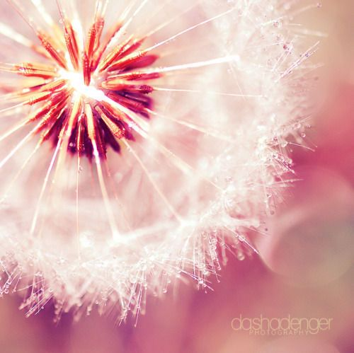 Tell me life is beautiful. #dandelion