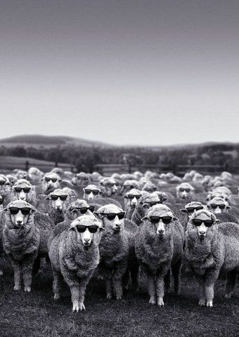 If I could choose what sheep to hang out with, I would choose these guys.