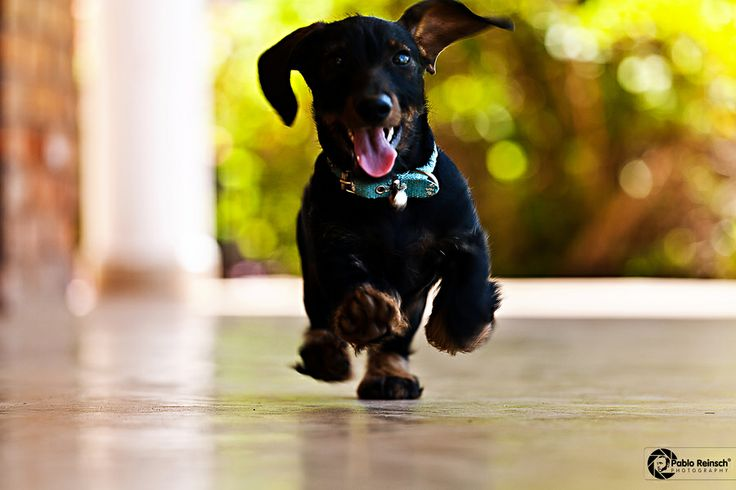 HappinessBreeds Dachshund, Animal Lovers, Dogs Breeds, Amazing Dogs, Dinner Time, Bright Pictures, Motivation Mondays, Gates Open, Adorable Animal