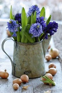 hyacinth flowers in a tiny galvanized pitcher