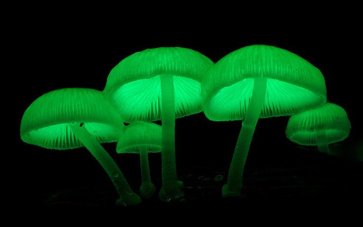 an introduction to bioluminescence in fungi This article provides a comprehensive overview of the various types of luciferase reagents and their uses in research.